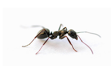 Grand Rapids Pest and Ant Control